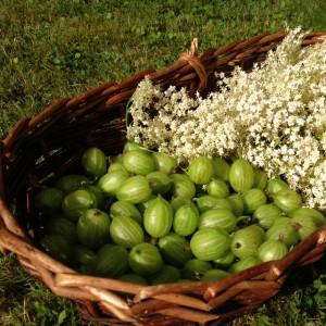 Gooseberries and Elderflowers